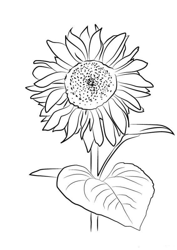 How To Draw A Sunflower Easy Step By Step Drawing Guides In 2020 Sunflower Drawing Sunflower Canvas Flower Art Drawing