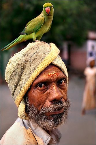 Talking Head - Madurai | Kili is the Tamil favourite pet ...… | Flickr