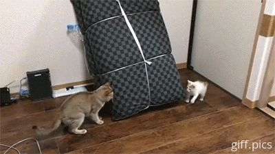 More AWESOME gifs —> http://catsdogsgifs.tumblr.com/