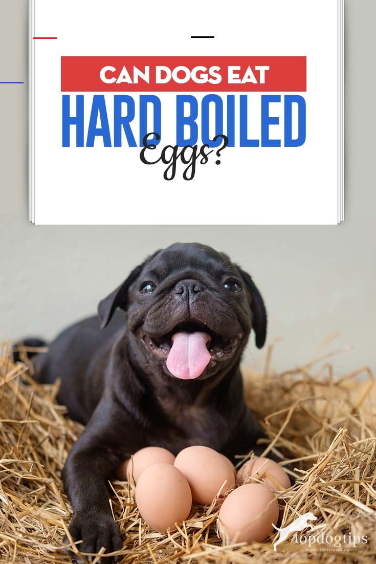 Boiledeggnutrition In 2020 Boiled Eggs Can Dogs Eat Eggs Can Dogs Eat