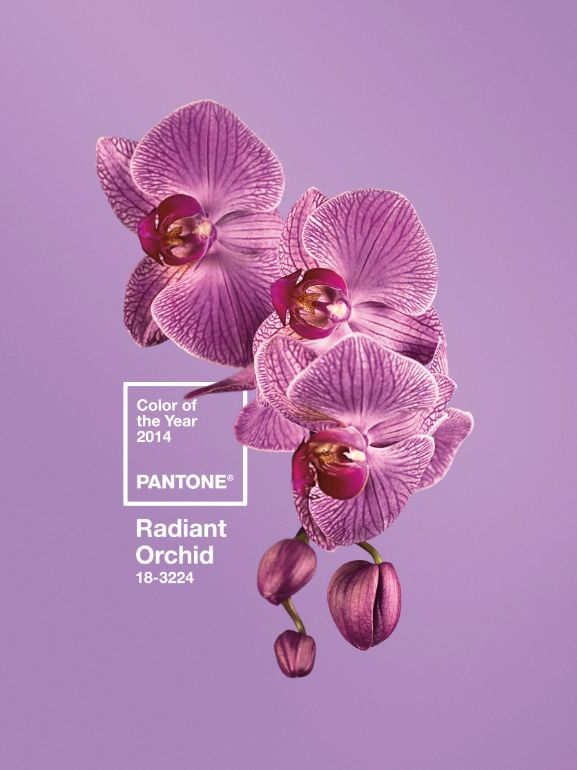 And Pantone's Color of the Year for 2014 is... Radiant Orchid! What do you think of their pick? Will you be adding splashes of Orchid into your home decor?Colors Trends, Pantone Colors, Pantone 2014, 2014 Colors, Pantone2014, Pantone Radiant, Radiant Orchids, Pantone Colours, Years 2014