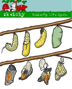 Butterfly Life Cycle! realistic looking!