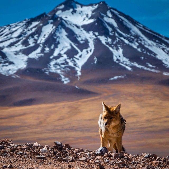 Atacama desert - Chile  | Photography by @dopaoaocaviar