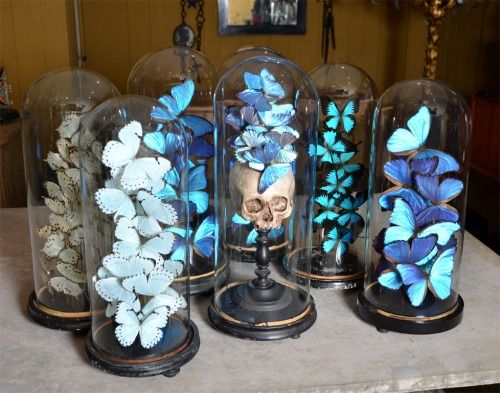 Glass domes mounted with collections of butterlies or plaster...