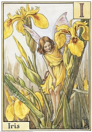 Illustration for the Iris Fairy from Flower Fairies of the Alphabet.  A girl fairy stands among iris plants looking down into a stream.    Author / Illustrator  Cicely Mary Barker