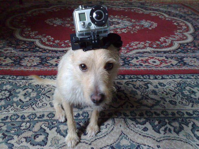 GoPro BE A dogHERO :D on PicsSAE  http://picssae.com?social-gallery-image=gopro-be-a-doghero-d