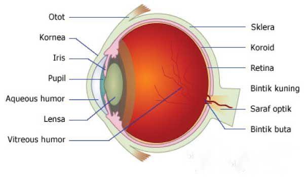 Berikut Ini Adalah Salah Satu Contoh Makalah Fisika Tentang Alat Optik Mata Terbaru 2017 Yang Dapat Kamu Download Secara Gratis Ada Prev Fisika Mata Belajar