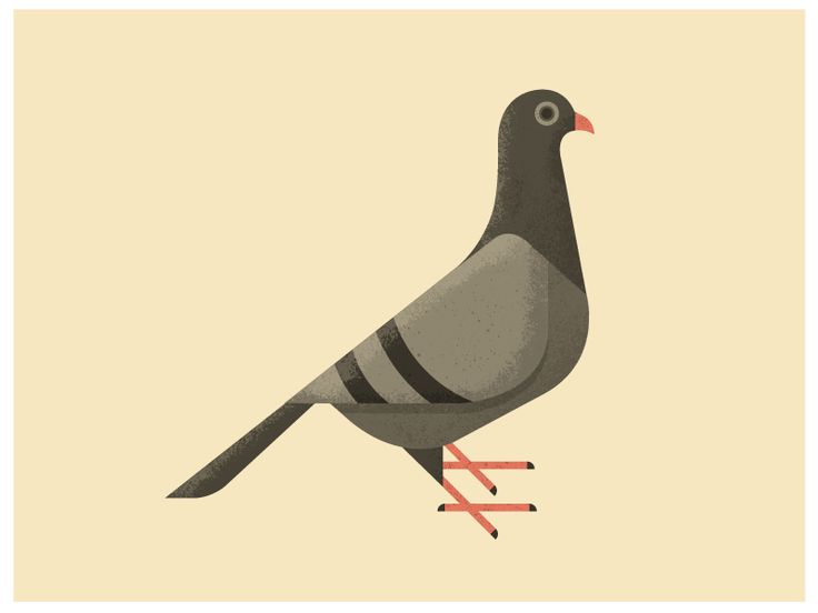 Pigeon illustration - photo#2