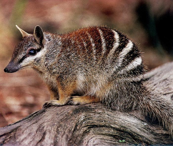 животные живущие в австралии картинки меня сегодня