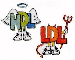 HDL LDL  all about cholesterol in a LCHF woe