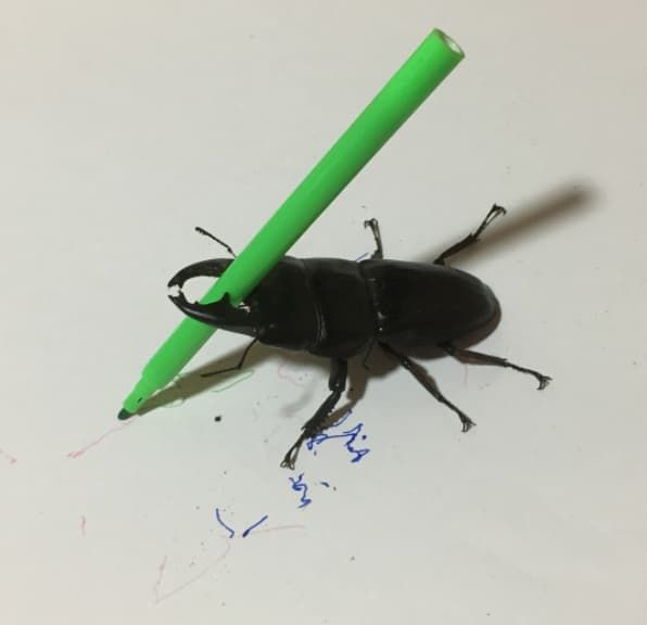 This Stag Beetle Loves To Draw And It's The Most Wholesome Thing