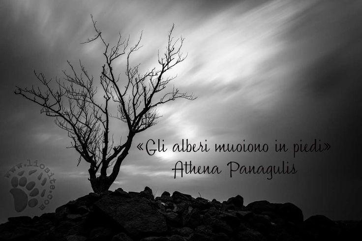 Athena Panagulis - Gli alberi ..