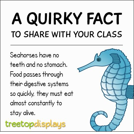 A quirky fact about seahorses to share with your class - from Treetop Displays. Visit our TpT store for printable resources by clicking on the provided links. Designed by teachers for Pre-Kindergarten to 7th Grade.