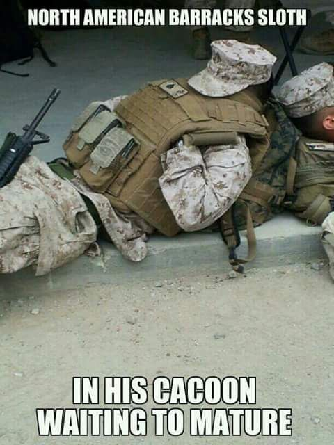 Just 3 more years of hibernation and he'll emerge as a salty civilian.  Via Marine Corps Memes