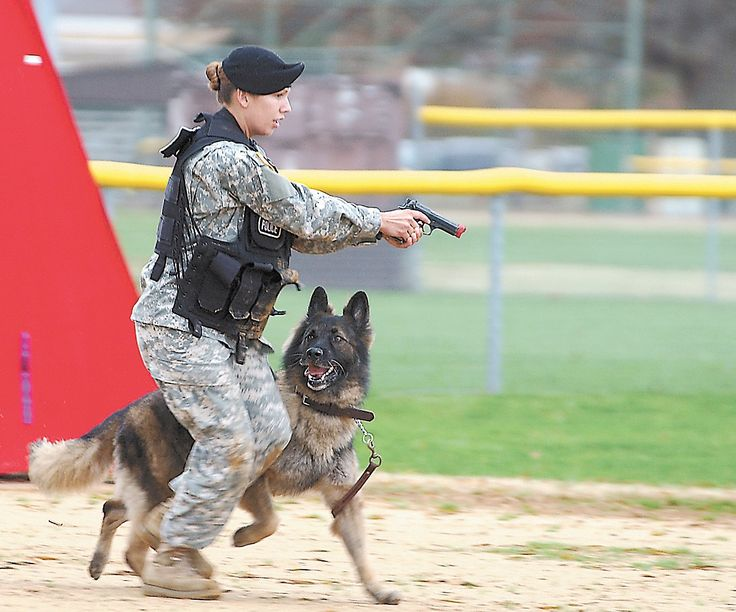 Sgt. Samantha Goscinski, a dog handler with the 17th Military Police Detachment at Fort Jackson, and her German shepherd, Butch, placed first for explosive detection during the Working Military Dog Competition at Fort Eustis, Va.