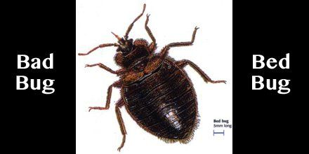 #Jacksonville We will eliminate your BED BUGS - Call Jax Pest Control at (904) 289-2800 https://t.co/TWwxDmc69c