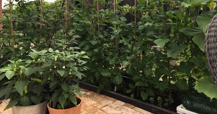 Lisbeth fra bloggen Countryliv er gæsteblogger, og hun skriver om hvordan hun graver sine tomatplanter ned, når sæsonen er slut.