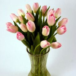 Light Pink Cut Tulips