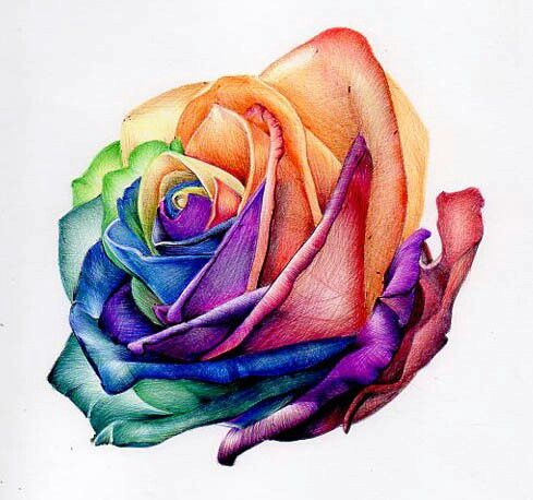 A drawing i done in biro ballpoint pens of a rainbow rose for Where can i buy rainbow roses