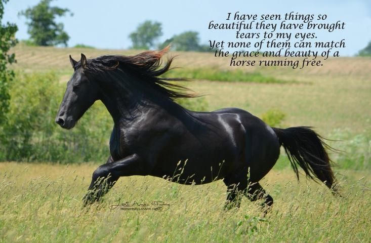 I have seen things so beautiful they have brought tears to my eyes. Yet none of them can match the grace and beauty of a horse running free.