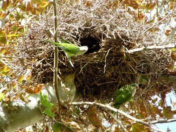 Distintos tipos de nidos de aves – Materiales de nidifación http://www.mascotadomestica.com/articulos-sobre-aves/nido-de-aves-tipos-de-nidos.html