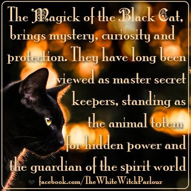 Black cat, Symbolism, spirit world, spiritual, meaning, magickal, totem, halloween, samhain, witch, witchy, wicca, knowledge, book of shadows, spells, protection, spirit animal #whitewitchparlour https://www.facebook.com/TheWhiteWitchParlour