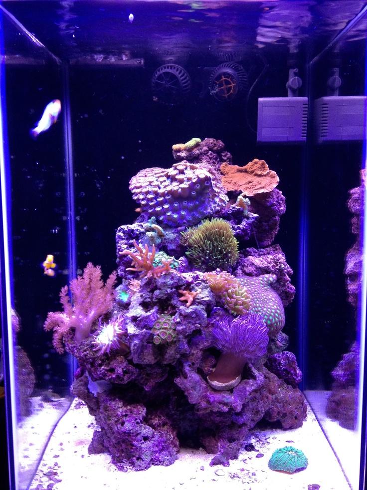 Wonderful Facebook Fan 15 Gallon Column Aquarium Lit By Ecoxotic Stunner Strips  (4 12,000K