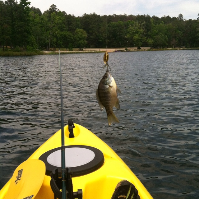 Kayak fishing for bluegill...