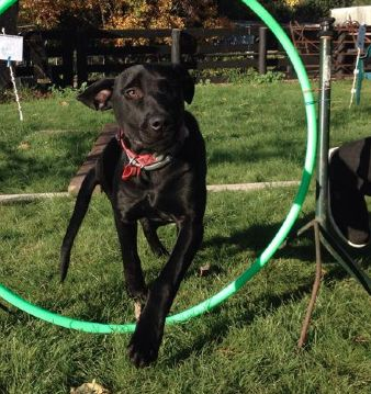 Jet learning to go through a hoop during the APART Course.