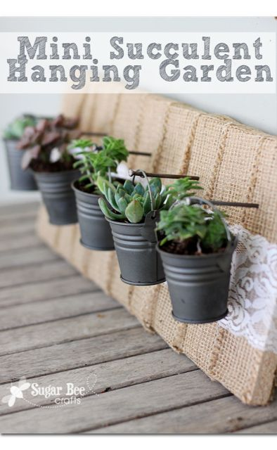 a little mini succulent garden - does it get any cuter?!