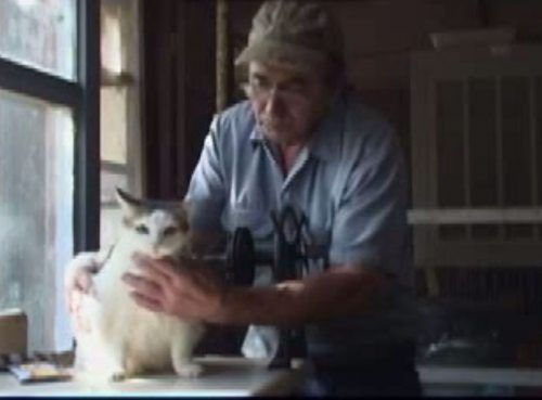 The oldest cat ever is Creme Puff who was born on 8/3/67 and lived until 8/9/05 – an amazing 38 years and 3 days! Creme Puff lived with her owner, Jake Perry, in Austin, Texas.