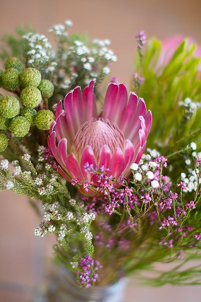 pretty fynbos - courtesy my friend @Tamara Bernitz