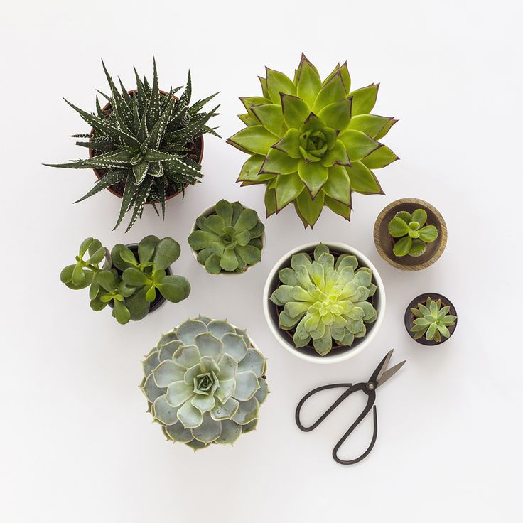 Succulents / Candy Pop: http://www.candypop.uk.com/