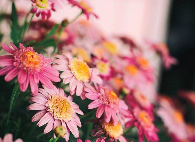 Ήρθε η άνοιξη γιούχου και τέτοια. #δενξέρωτιλουλούδιαείναιμημερωτάτε #flowers #flower_daily #spring #pink #nature #canonphotography #canongreece #πολλήροζίλα #