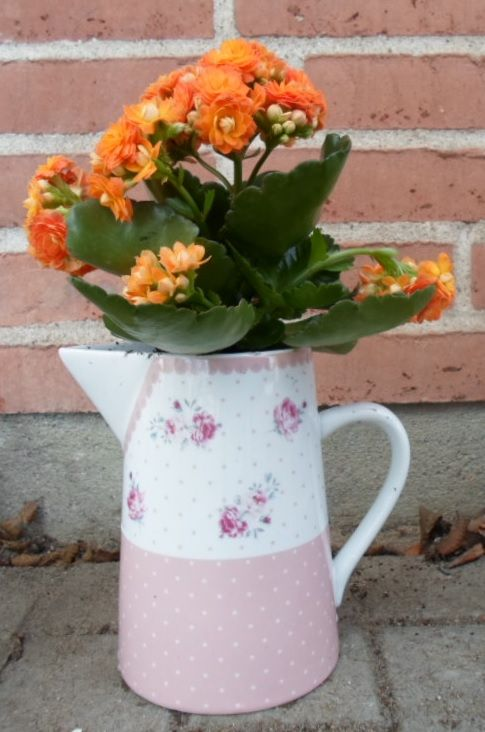 Flower planted in a pink pitcher.