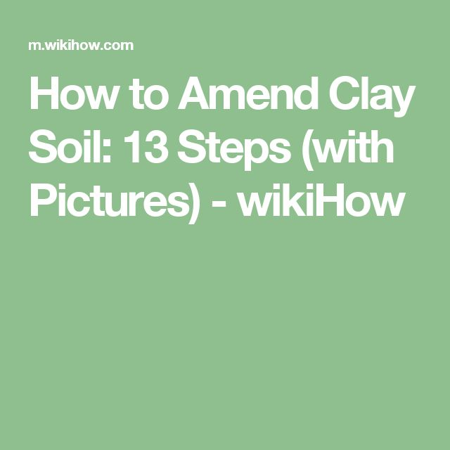 25 Best Ideas About Clay Soil On Pinterest Planting In Clay Black Eyed Susan And Plants That