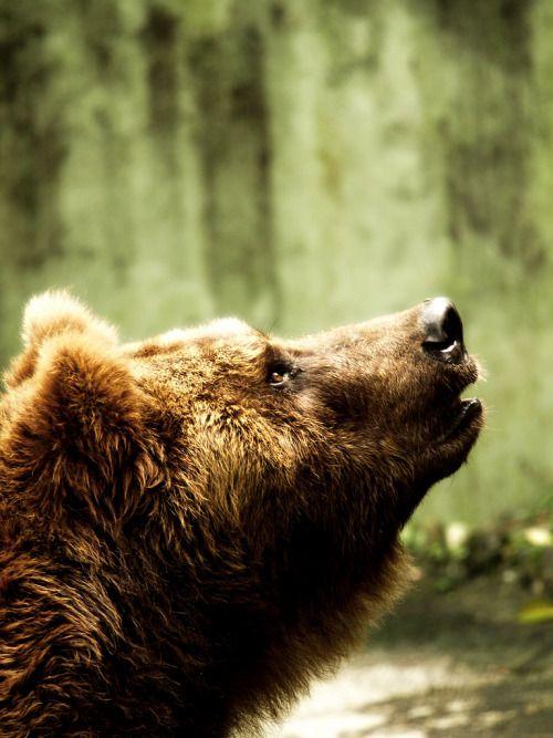 wild-diary: Lonely Bear  Adityo Saputra