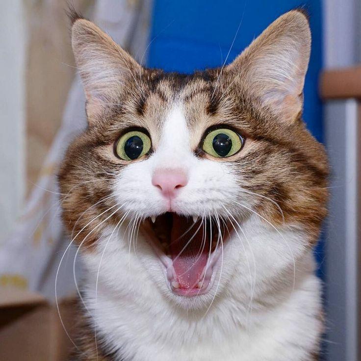 курсов самые прикольные коты в мире фото словам девушки, эйлате