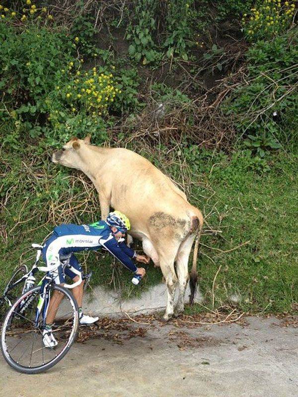 udderly thirsty 660: Epic Fails Photo, Raw Milk, Funny Pics, Bike Riding, Funny Pictures, Funny Humor, Protein Shakes, Holy Cows, Fast Food