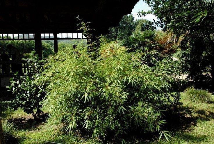 Les 20 meilleures id es de la cat gorie jardin de bambous for Conseil plantation jardin