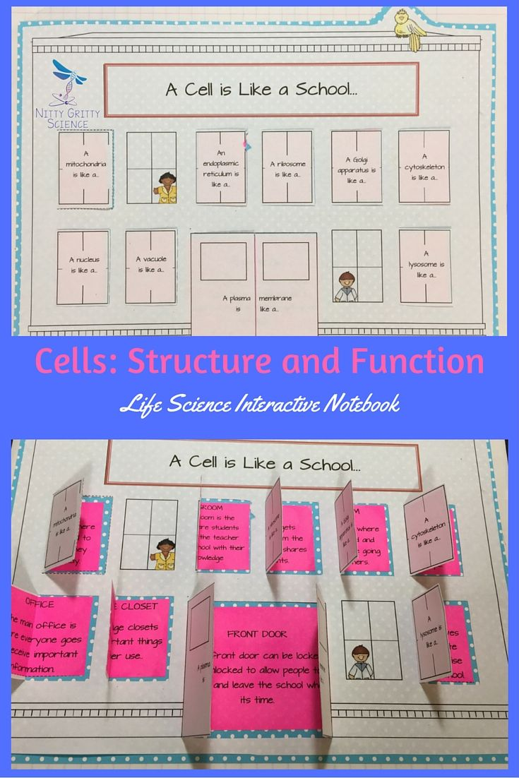 Cell Structure and Function: Life Science Interactive Notebook includes the…