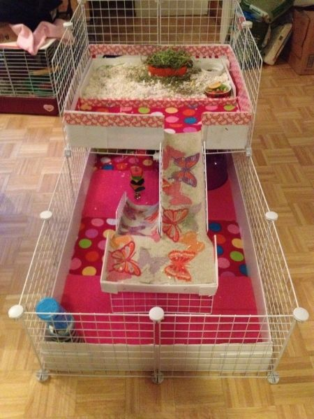 Best 25 guinea pig cages ideas on pinterest guinea pig for Diy guinea pig hutch