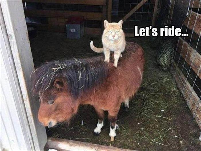 Günün komik hayvan resimleri – kaçık Picdump 10 (90 fotoğraf)