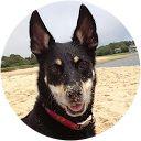 PetFirst Pet Insurance - Best Pet Insurance for Senior Pets
