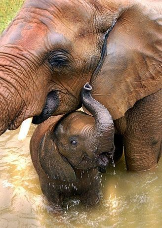 Momma Elephant and baby elephant taking a bath, Adorable! This is happiness!
