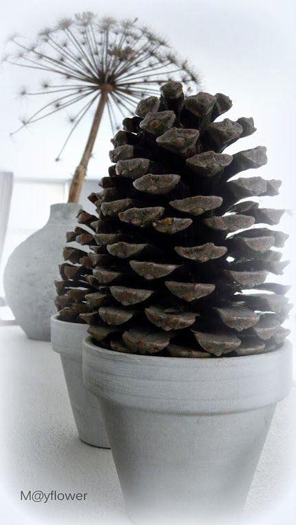 pinecone http://mayflower-meibloem.blogspot.nl/