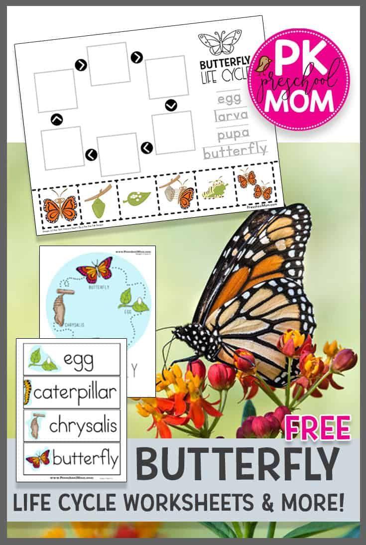 Life Cycle Of A Butterfly Worksheet Butterflies Activities Butterfly Life Cycle Kindergarten Life Cycles Kindergarten [ 1094 x 735 Pixel ]
