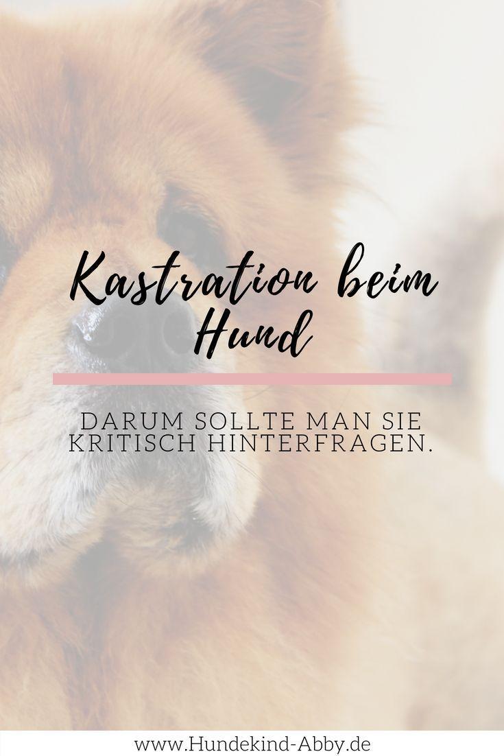 Kastration beim Hund – Zurecht umstritten