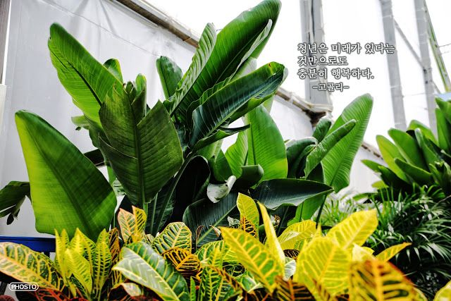 청년의 행복 | 포스토 청년은 미래가 있다는 것만으로도 충분히 행복하다. -고골리- http://www.phosto.kr/?p=4503