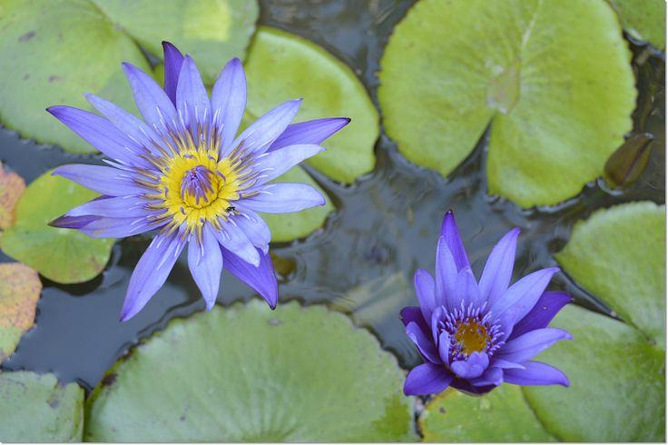 flower No,1